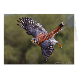 American Kestrel Card