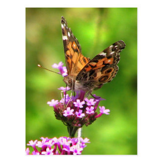 American Lady Butterfly Post Card