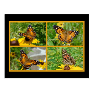 American Lady Butterfly - Vanessa virginiensis Postcard