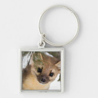 American Marten Or Pine Marten Silver-Colored Square Key Ring