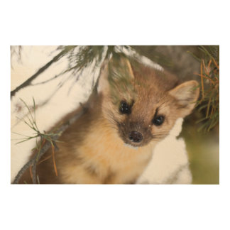 American Marten Or Pine Marten Wood Wall Art
