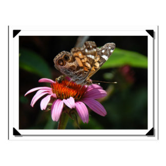 American Painted Lady Butterfly Postcard