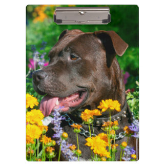 American Pit Bull in field of flowers Clipboards