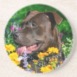 American Pit Bull in field of flowers Coaster