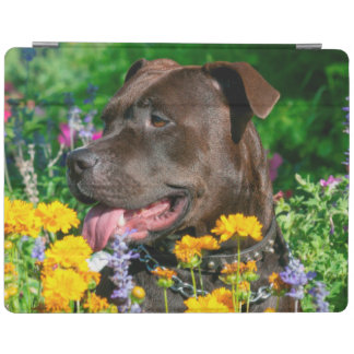 American Pit Bull in field of flowers iPad Cover