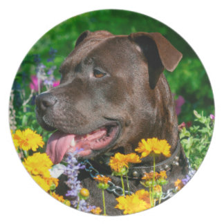 American Pit Bull in field of flowers Plate