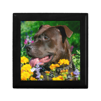 American Pit Bull in field of flowers Small Square Gift Box