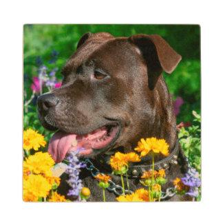American Pit Bull in field of flowers Wood Coaster