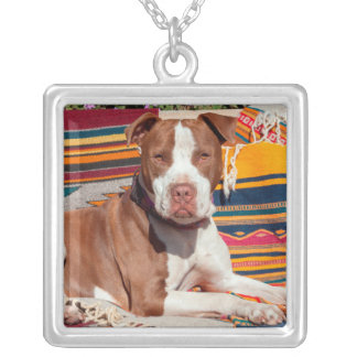American Pit Bull lying on blankets Silver Plated Necklace