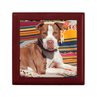 American Pit Bull lying on blankets Small Square Gift Box