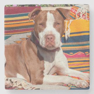 American Pit Bull lying on blankets Stone Coaster