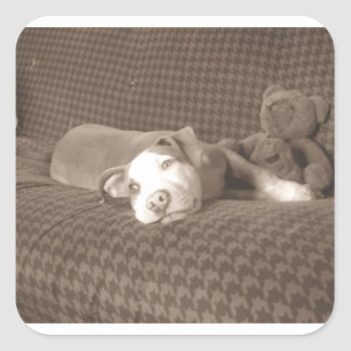 American_Pit_Bull_Terrier_and_teddy_bear_on_couch. Square Sticker