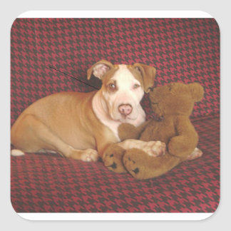 american pit bull terrier puppy w teddy square sticker