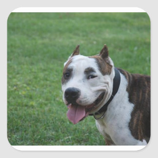 american pit bull terrier smiling square sticker