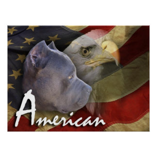 American Pitbull Terrier Dog, Flag, Bald Eagle Poster