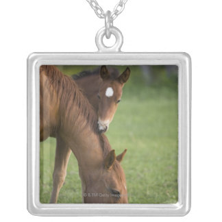 American Quarter horse mare and colt in field at Silver Plated Necklace