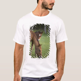 American Quarter horse mare and colt in field at T-Shirt