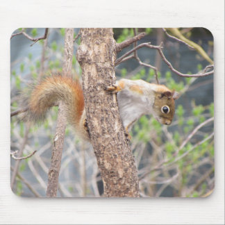 American Red Squirrel Mouse Mat