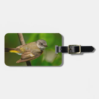 American Redstart (Setophaga Ruticilla) Female Luggage Tag