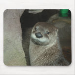 American River Otter (Lutra canadensis) Mouse Pads