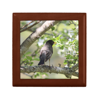 American Robin and Spring Blossoms Gift Box