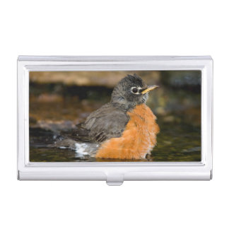 American Robin bathing 2 Business Card Holders