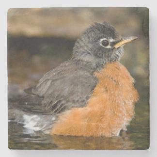 American Robin bathing 2 Stone Coaster