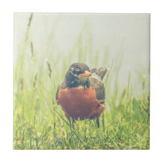 American Robin Bird Ceramic Tile