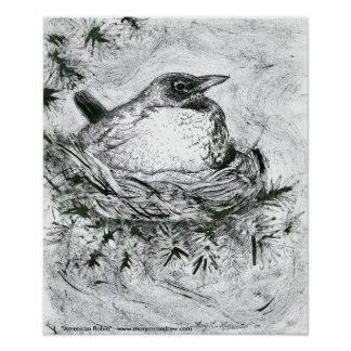 American Robin -bird Poster or Fine Art Print