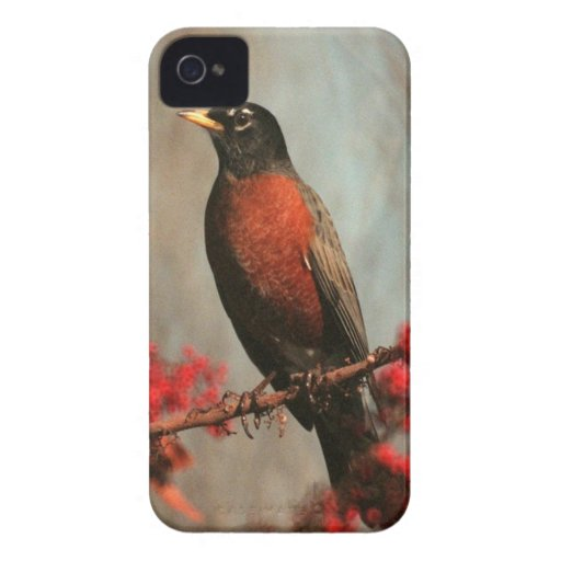 American Robin iPhone 4 Covers