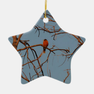 American Robin home to roost Christmas Ornament
