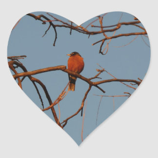 American Robin home to roost Heart Sticker