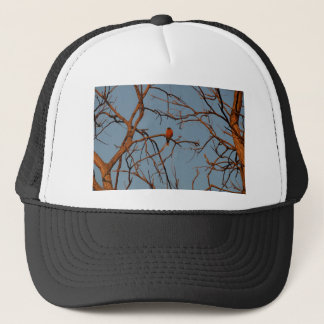 American Robin home to roost Trucker Hat