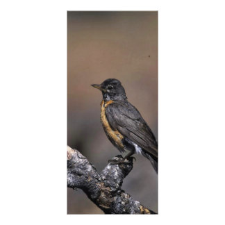 American Robin Personalized Rack Card