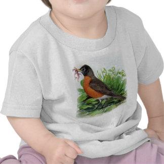 American Robin Tshirts