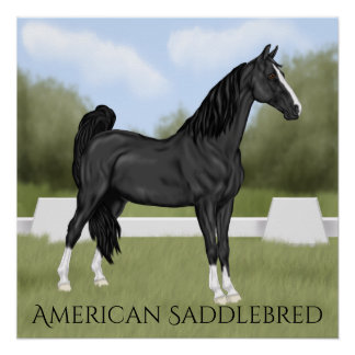 American Saddle-bred Horse Poster