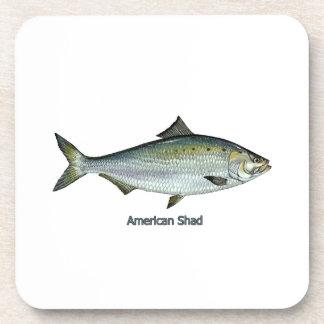 American Shad Coaster
