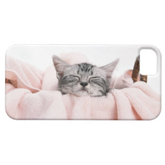 American Shorthair 10 Barely There iPhone 5 Case