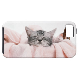 American Shorthair 10 iPhone 5 Case