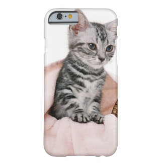 American Shorthair 2 Barely There iPhone 6 Case