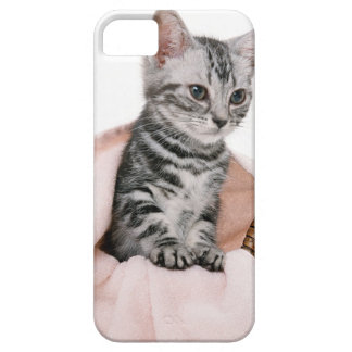 American Shorthair 2 iPhone 5 Case