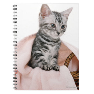 American Shorthair 2 Notebook