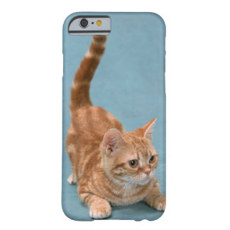 American Shorthair 3 Barely There iPhone 6 Case