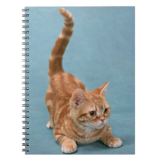 American Shorthair 3 Notebooks