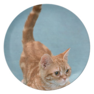 American Shorthair 3 Party Plates
