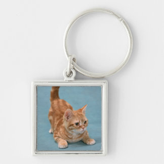 American Shorthair 3 Silver-Colored Square Key Ring