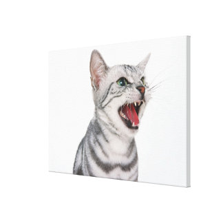 American Shorthair 5 Canvas Print