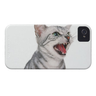 American Shorthair 6 Case-Mate iPhone 4 Cases