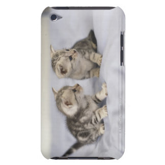 American Shorthair 7 Barely There iPod Covers