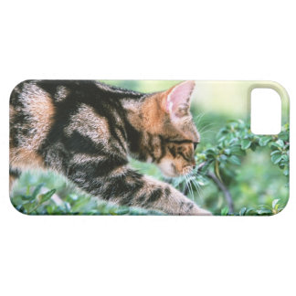 American Shorthair 7 Case For The iPhone 5